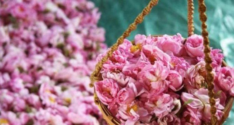 الورد الطائفي1