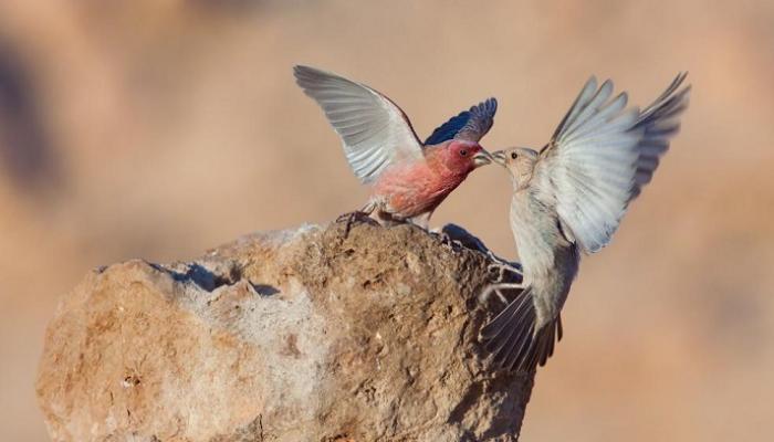 173-121929-tree-bird-flower-jordan-natural-symbols_700x400